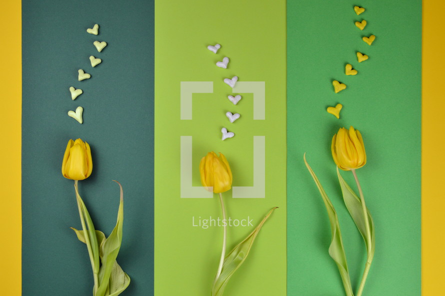 yellow tulips on blue and yellow