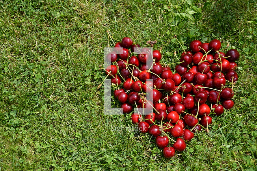 Fresh cherries in a heart shape in the grass.