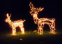 A pair of Christmas deer light display stands together to light up the night sky with white decorative Christmas lights to light up the night and green grass and add some warmth, fun and cheer to the holidays to bring the magic of Christmas to friends and neighbors.