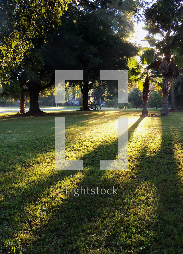 The morning sunlight shining on a palm tree and green grass casting long shadows in a rural country setting among the trees.