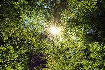 Sun beaming through bright green leaves.