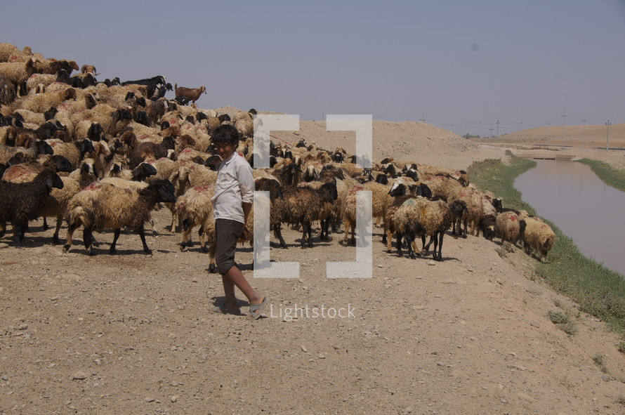 Shepherd boy in sandy desert by an oasis