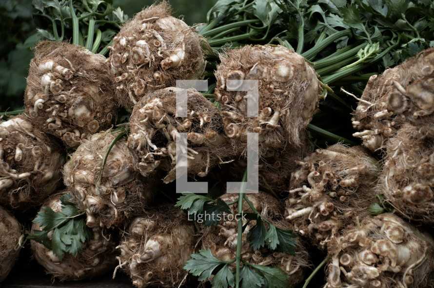 pile of celery roots