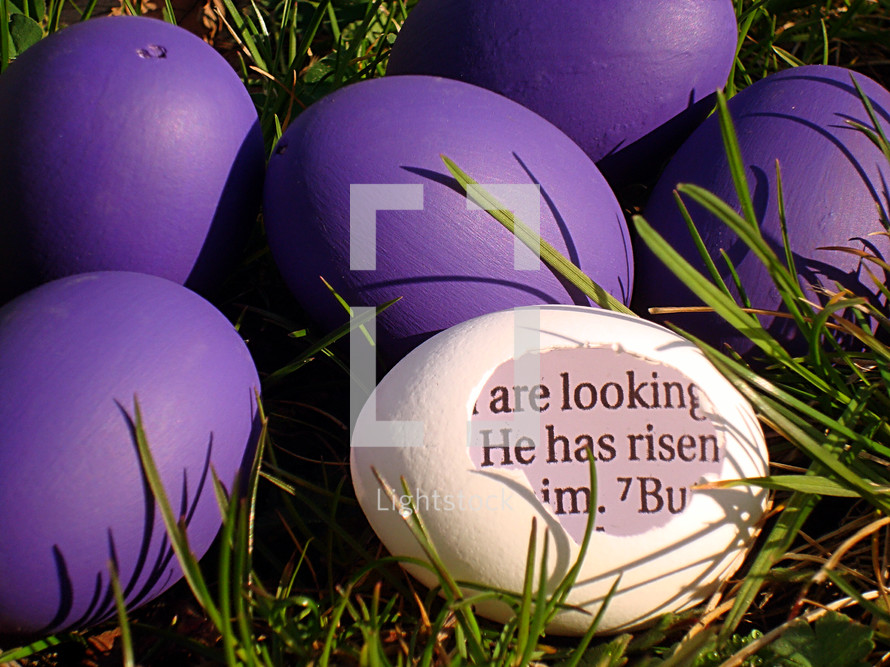 A white eggshell with a piece of the bible inside saying: HE HAS RISEN! between purple eggs in the grass,