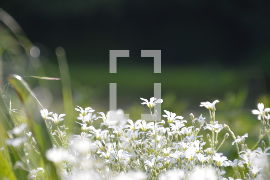 Meadow with spring flowers.