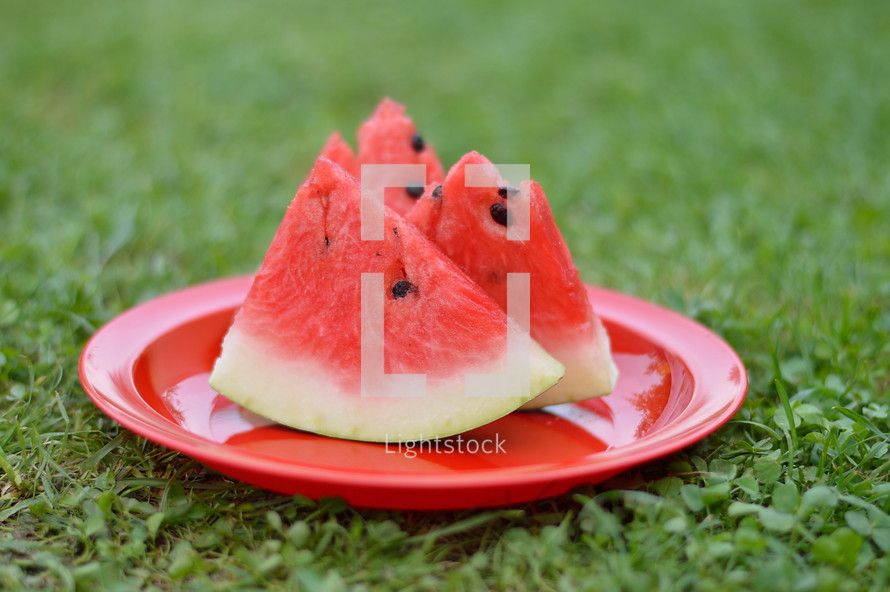 slices of watermelon on a red plate in green grass