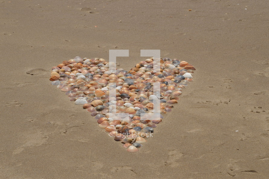 many seashells shaping a heart in the sand