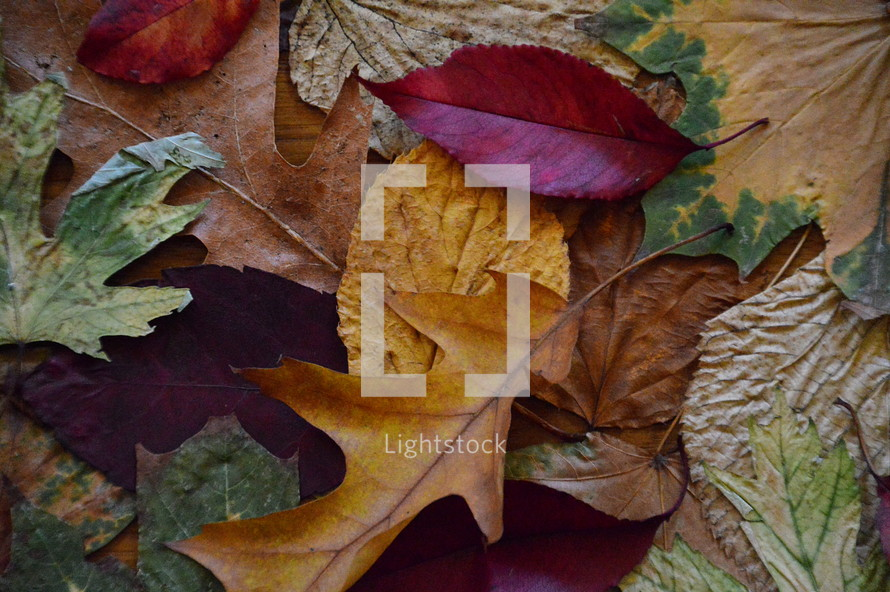 colorful autumn leaves.  autumn, fall, leaf, leaves, colorfully, colorful, multicolored, change, changed, changing, fallen, season, seasons, bright, red, orange, yellow, brown, dead, dying, die, death, dead leaves, background, sad, sadly, blue, unhappy, gloomy, sorry, sorrowful, mourn, mournful, mournfully, desolate, woeful, upset, dolorous, tearily, tear, tears, plant, nature, outdoor, green, grey, lonely, natural, October, November, mood, vanish, pass, fallen off, texture, leaf pile, sadness, grief, sorrow, mourning, misery, depression, dolorousness, pain, hurt, anguish, dolorous