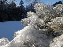 Ice on frozen pine tree branches.