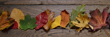 row of fall leaves on wood