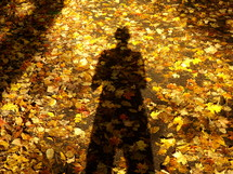 Shadow on the autumn leaves on the ground.