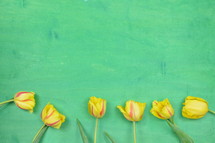 yellow tulips on a green background