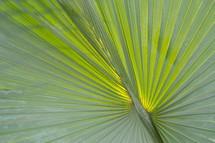 Palm branches or fronds