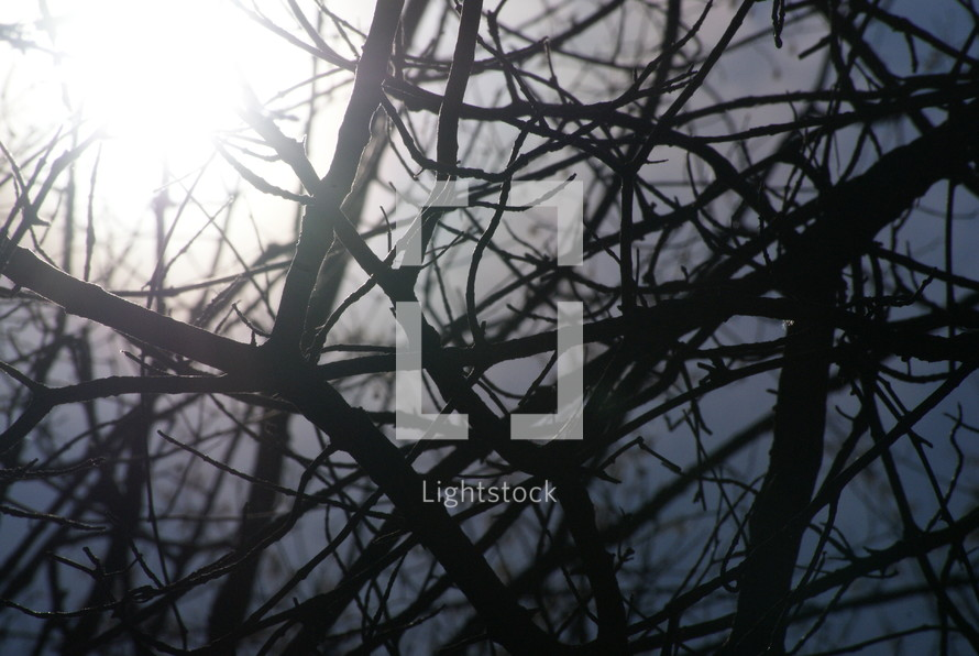 crisscrossing branches and a sunburst