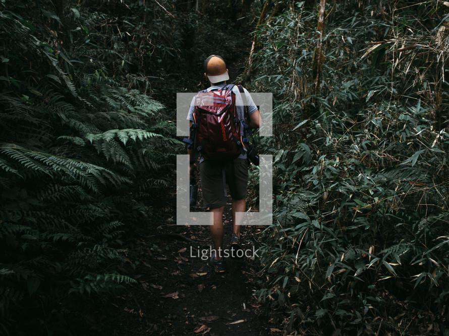 man hiking through a jungle
