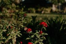 butterfly on flowers in a flower garden