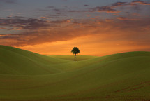 single tree and green hills