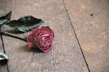 Withered rose on a wood table.