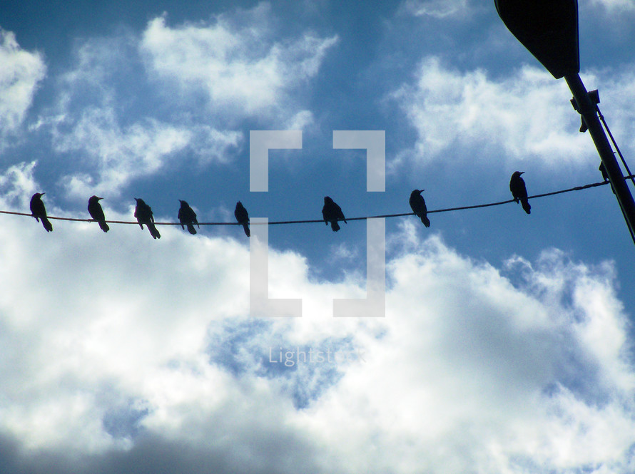 A group of eight birds sitting together on a telephone wire relaxing together against a blue sky and clouds on a bright and sunny day. These birds flew south from somewhere up north and come to Florida each year to enjoy the warmer climate.