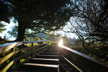 sunlight glowing on wood stairs in wooded park