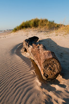 driftwood on beach sand