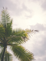 top of a palm tree under a gray sky