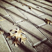 Fall leaves on ground