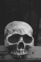 Head skull