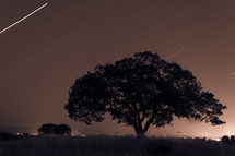 tree with lightning strike in background