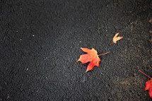yellow and red fall maple leaf on black asphalt