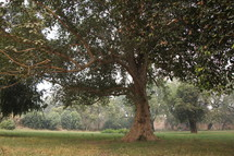 Large tree in park