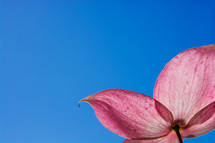 pink flower against a blue sky background