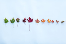 colors of fall leaves in a row