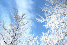 ice on the branches of winter trees