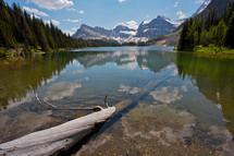 fallen tree in a clear mountain lake