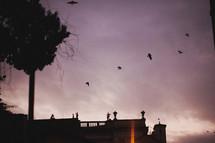 pigeons in flight at dusk