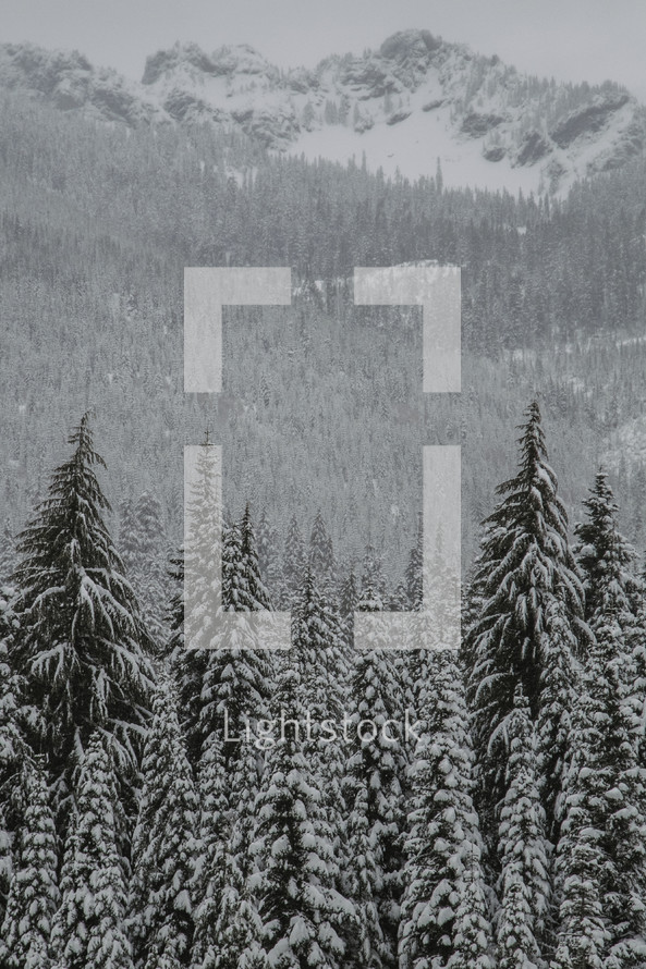 Snowfall on a forest of fir trees with mountains in the background.