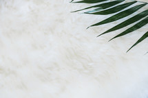 palm fronds, Palm Sunday, negative space, background