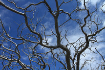 tree branches against a blue sky