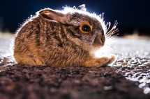rabbit sitting on ground