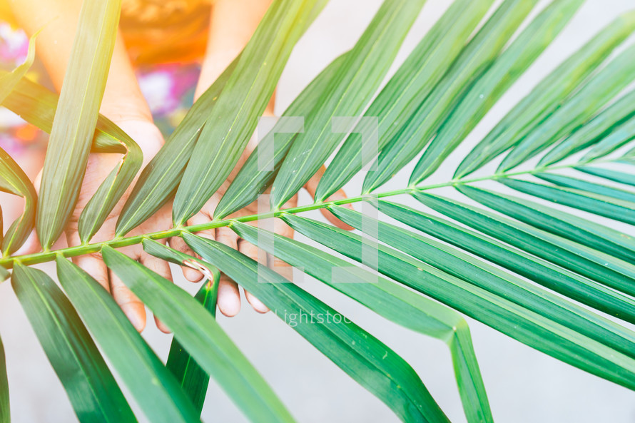 hands touching a palm leaf