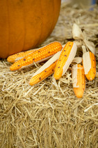 corn and pumpkins in hay