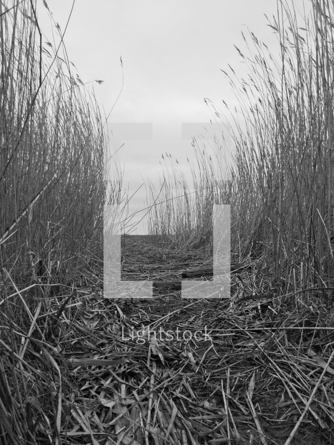 Dry wheat path