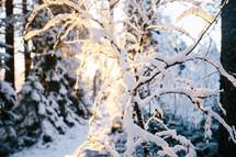 snow on a winter tree