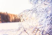 ice on a bush