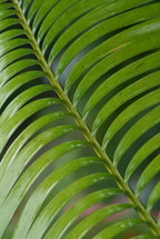 Long, thin, tropical plant leaves