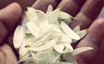 hand full of flower petals