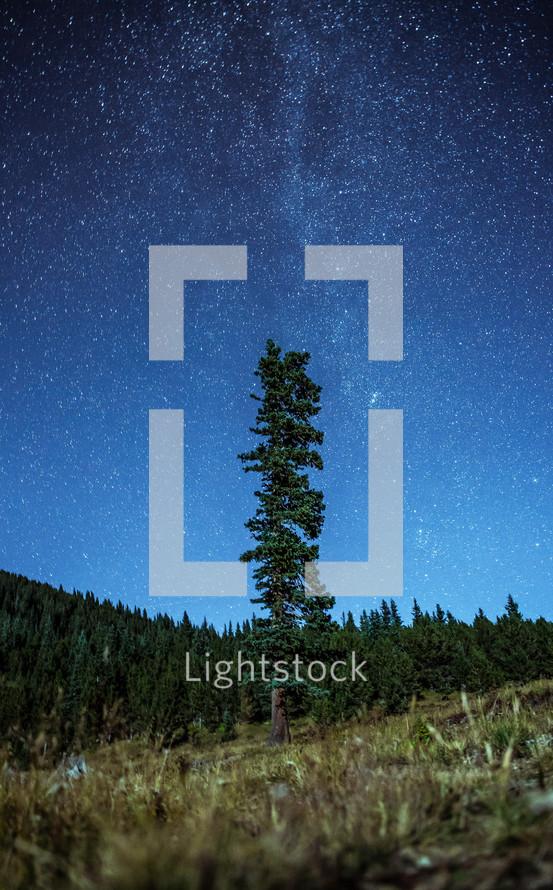 A single tall tree reaches toward a starry sky.