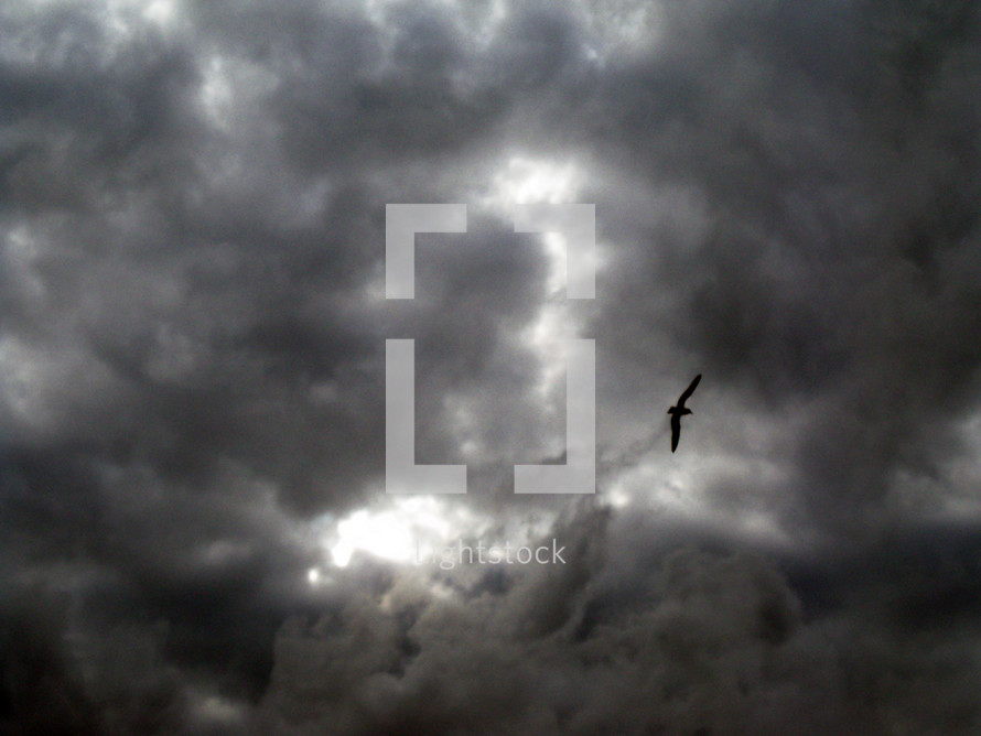 Ominous dark storm clouds gather as a bird flies overhead showing that a storm is coming.