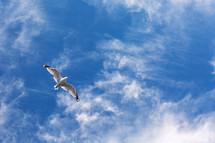 Bird soaring in the sky.